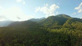 Tir aérien au-dessus du panorama de montagne de forêt Le bourdon tourne au-dessus des arbres verts clips vidéos