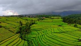 Tir aérien de village de terre de vert de Jatiluwih Terrasses renversantes de riz sur l'île de Bali Panorama banque de vidéos