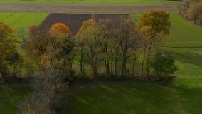 Tir aérien des arbres dans la bordure de haies, feuillage vibrant d'automne image libre de droits