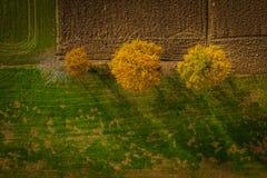 Tir aérien des arbres dans la bordure de haies, feuillage vibrant d'automne photographie stock