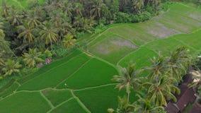 Tir aérien des gisements et des maisons de riz entourant un passage couvert à un centre du village d'Ubud sur une île de Bali Tra clips vidéos