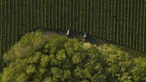 Tir aérien des tracteurs d'un arbre travaillant au vignoble, Bordeaux photo libre de droits