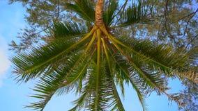 Tir au ralenti de point de vue - la personne s'étendant sur une plage tropicale recherche sur un palmier banque de vidéos