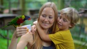 Tir au ralenti superbe d'une mère et d'un fils en parc d'oiseau alimenter un groupe de perroquets verts et rouges avec du lait banque de vidéos