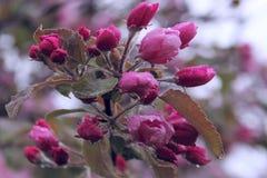 Tir cultivé de belles fleurs Multitudes de fleurs Image libre de droits