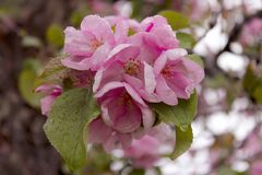 Tir cultivé de belles fleurs Multitudes de fleurs Images libres de droits