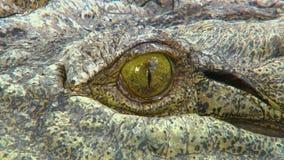 Tir détaillé du globe oculaire d'un crocodile d'eau de mer banque de vidéos