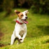 Tir d'action de chien photos libres de droits