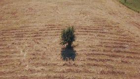 Tir d'un champ avec une herbe sèche banque de vidéos