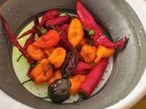 Tir d'un mélange des poivrons rouges, oranges, jaunes et noirs image libre de droits
