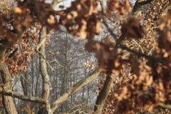 Tir de baground de chêne images libres de droits