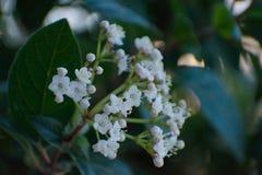 Tir de belles fleurs dans le jardin photos stock