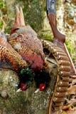 Tir de faisan Photo libre de droits