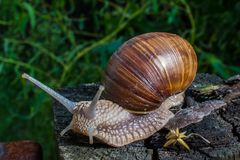 Tir de macro d'escargot Images stock