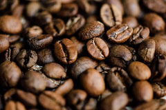 Tir de plan rapproché de café fraîchement rôti Photo libre de droits
