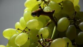 Tir de plan rapproché de raisins blancs (Rotation) banque de vidéos