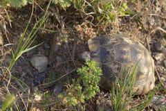 Tir en gros plan d'une petite tortue image stock