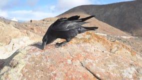 Tir en gros plan de corbeau sur la formation de roche banque de vidéos