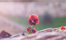 Tir extérieur de fleur orange, backround brouillé, coucher du soleil Photos stock