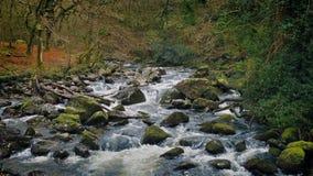 Tir fait une boucle de jolie rivière de région boisée banque de vidéos