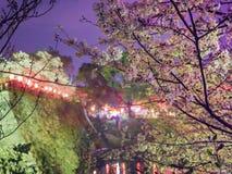 Tir japonais de nuit de château et de fossé Photos libres de droits