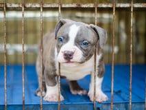 Tir mignon de studio de chien Photos libres de droits