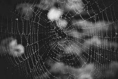 Tir monochrome de grande toile d'araignée avec la rosée Photographie stock