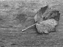 Tir noir et blanc de nature Images stock