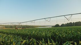 Tir panoramique de champ de maïs irrigué banque de vidéos