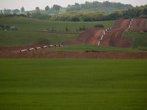 Tir sur terre de canalisation Image stock