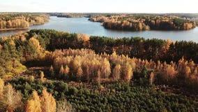 Tir vertical aérien : Forêt mélangée d'automne banque de vidéos