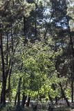 Tir vertical de jeune arbre que le beau dha de sunlights a laissé tomber sur leurs feuilles Images libres de droits