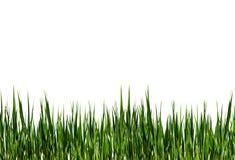 Tira de hierba verde Imagen de archivo