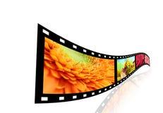 Tira de la película con los cuadros de flores. Foto de archivo libre de regalías