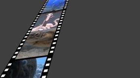 Tira de la película con vídeos metrajes