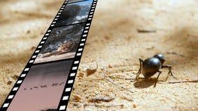 Tira de la película y un insecto almacen de metraje de vídeo