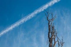 A tira dos aviões de voo Ramos secos de uma árvore velha imagens de stock