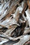 Tirado de corteza de árbol Fotos de archivo libres de regalías