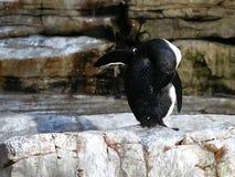 Tirado de un pingüino foto de archivo libre de regalías