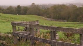 Tirado de una cerca de madera vieja con los campos almacen de metraje de vídeo
