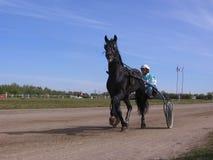 Tirado por um cavalo de competência com o cavalo e o cavaleiro da pista de Novosibirsk das raças trotar dos cavalos das competiçõ fotos de stock royalty free