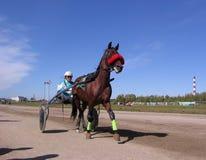 Tirado por um cavalo de competência com o cavalo e o cavaleiro da pista de Novosibirsk das raças trotar dos cavalos das competiçõ foto de stock