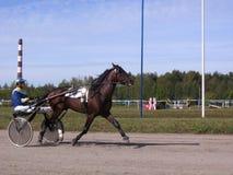 Tirado por um cavalo de competência com o cavalo e o cavaleiro da pista de Novosibirsk das raças trotar dos cavalos das competiçõ imagens de stock