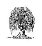 Tiraggio dell'albero di salice Immagini Stock Libere da Diritti