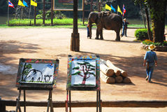 Tiraggio dell'immagine dagli elefanti immagini stock libere da diritti