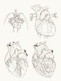 Tiraggio della mano di anatomia del cuore illustrazione di stock