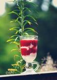 Tasty strawberry dessert tiramisu Royalty Free Stock Image