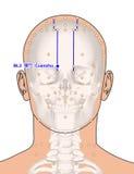 Tirando com esqueleto, ponto BL2 Cuanzhu da acupuntura, 3D Illustr Foto de Stock
