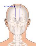 Tirando com esqueleto, ponto BL5 Wuchu da acupuntura, 3D Illustrat Imagem de Stock Royalty Free