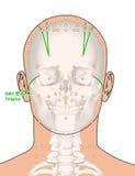 Tirando com esqueleto, ponto GB2 Tinghui da acupuntura, 3D Illustr Imagens de Stock